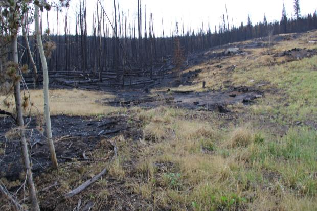 071316-beaver-creek-fire-incinet