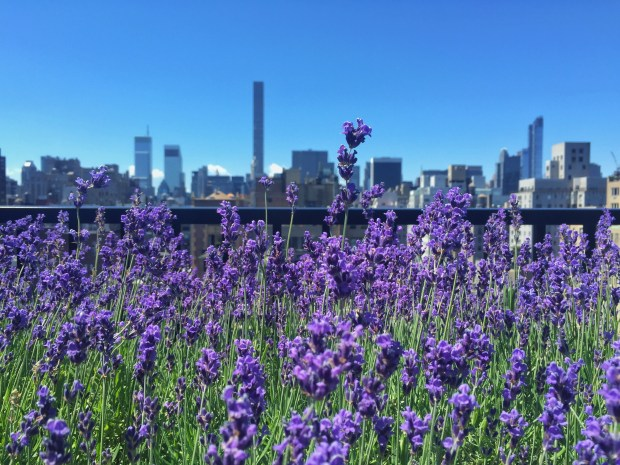 The view from the rooftop garden bar at the Surrey hotel on New York's Upper East Side. (Photo courtesy of Matt Duchesne)