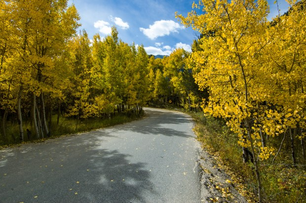 Golden aspen line the Cottonwood Lakes turnoff from the Cottonwood Pass Road outside Buena Vista, Colorado.