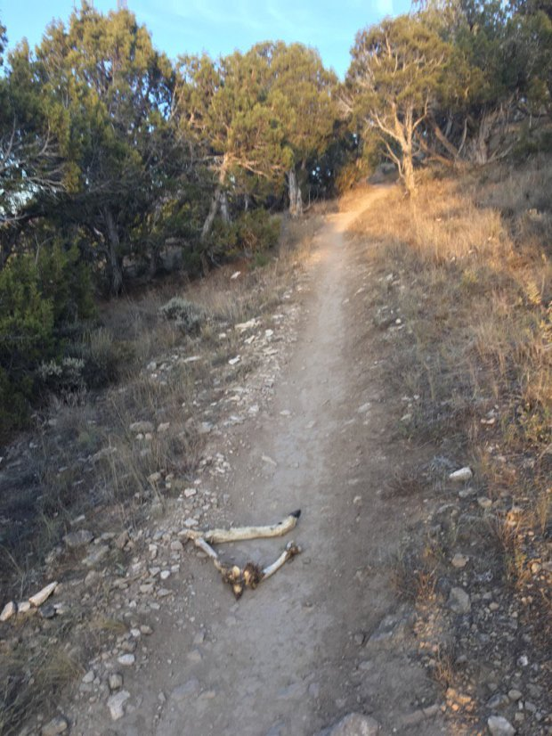 A deer leg on the Boneyard Trail above Eagle. Photo by Jason Blevins