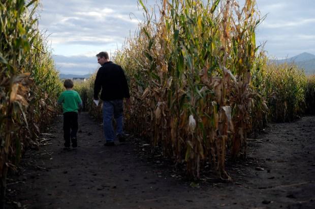 Jon Johnson and his son, Ethan Johnson, 8, wander the Corn Maze at Denver Botanic Gardens at Chatfield in Littleton, Colorado on October 10, 2014.