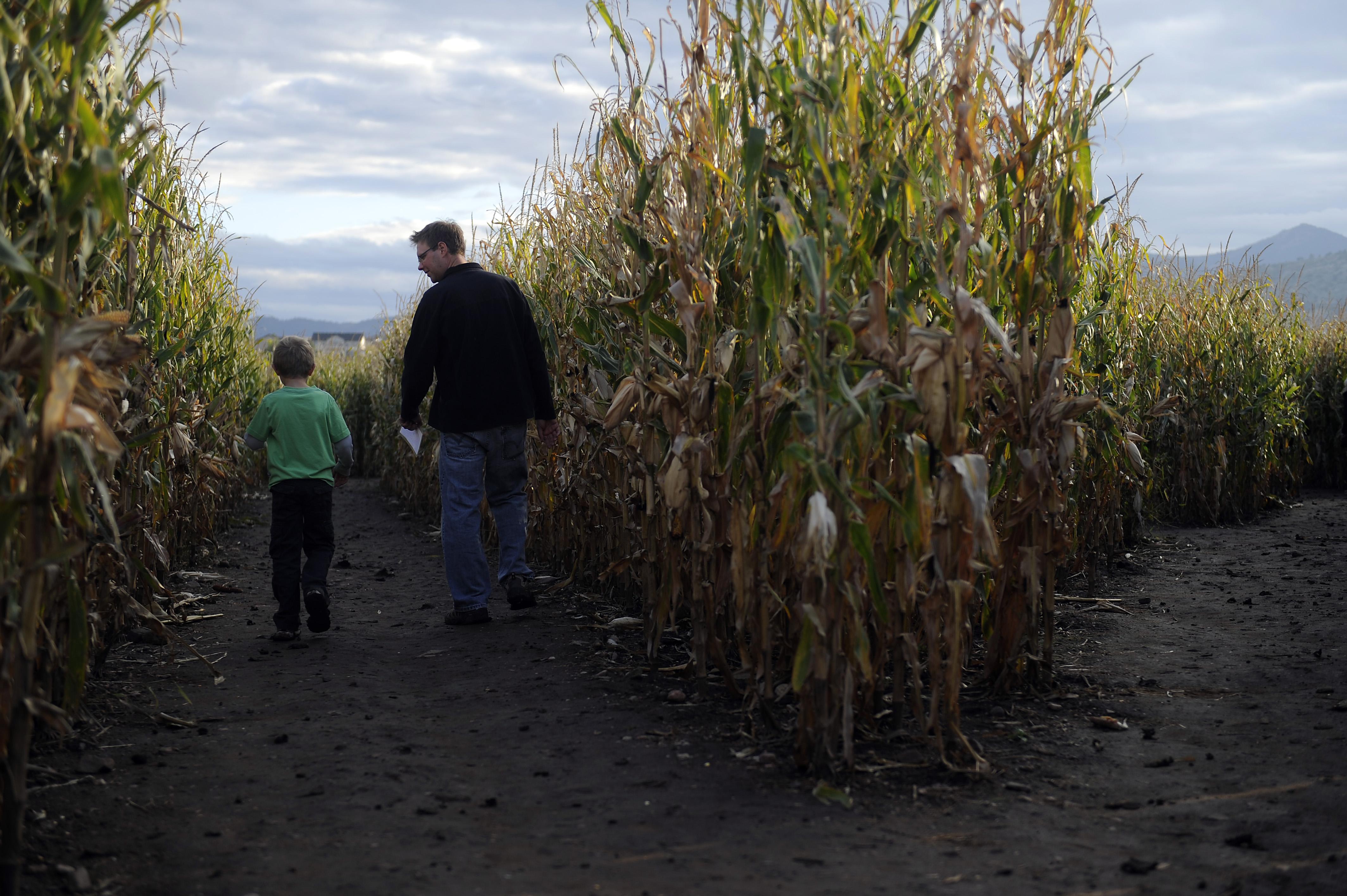 Jon Johnson And His Son, Ethan Johnson, 8, Wander The Corn Maze At