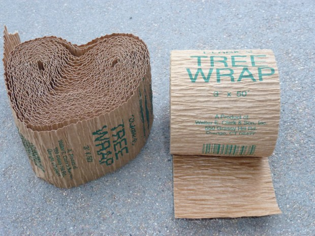 Now that it's fall, go ahead and protect young trees from winter sunscald with tree wrap.