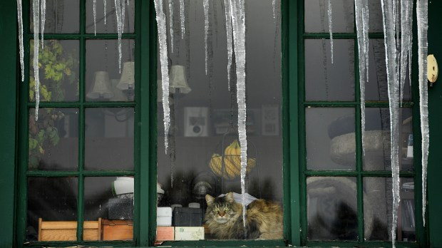 Matimeow the cat sits warmly inside his house with large icicles hanging from outside on April 18, 2016 in Pinecliffe.