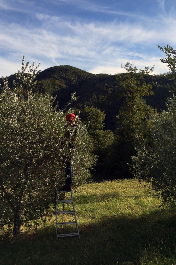 The magic of pressing olive oil in Italy – The Denver Post