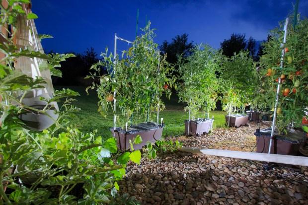 Nick Mangels was new to gardening ...