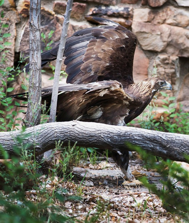 7 News Denver Zoo: Two Longtime Residents, An Eagle And Otter, Die At Pueblo