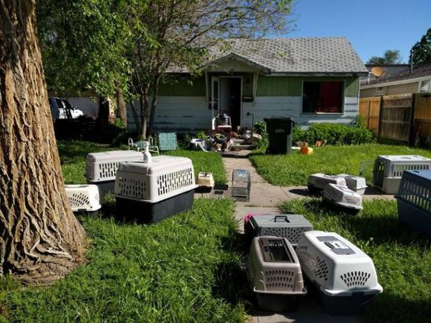 Animal carriers and traps sit in the yard outside a home on Clark Street where over 80 live cats and kittens were found Wednesday after the front door to the property was left open.