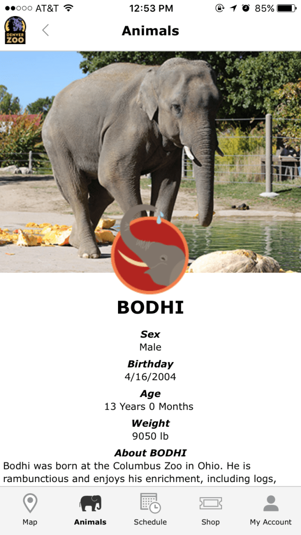 A screenshot of the Denver Zoo's new app, which gives visitors real-time information about the animals from its database.