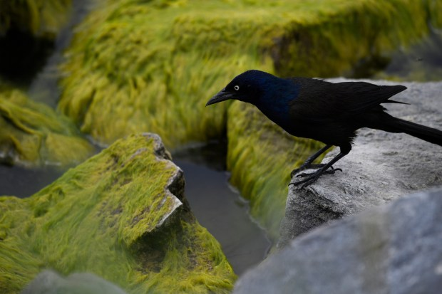 A bird perches itself near moss-covered ...