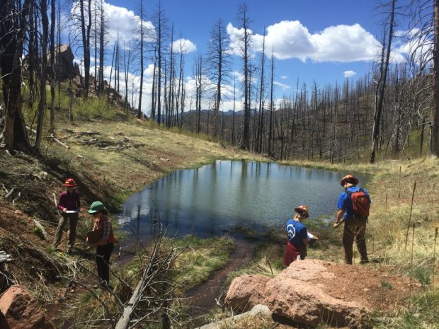 Staffers with the Rocky Mountain Field Institute and the U.S. Forest Service arrive in a valley along the Waldo Canyon fire burn scar to check on the progress of willow trees they planted in 2016.