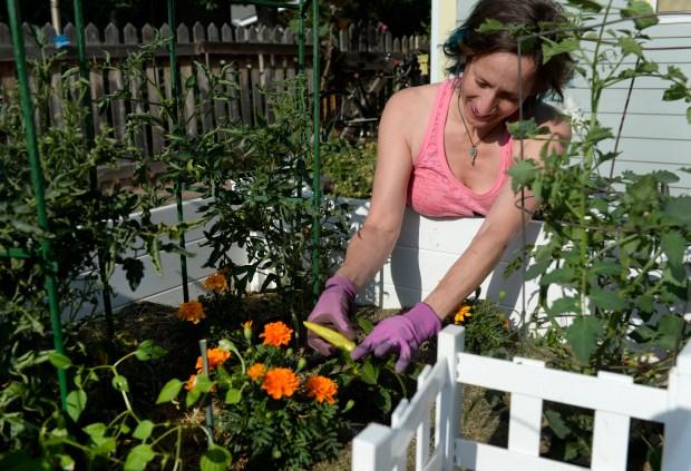 Megan Keefe tends to her low-maintenance keyhole garden in her backyard in Lafayette.