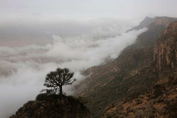 In this Aug. 5, 2017, photo, a tree hangs off a cliff of the Jabal Samhan mountain, above clouds, during the summer monsoon near Mirbat, southern Oman.