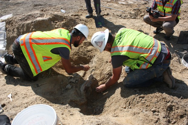 A rare dinosaur fossil is uncovered in Thornton.