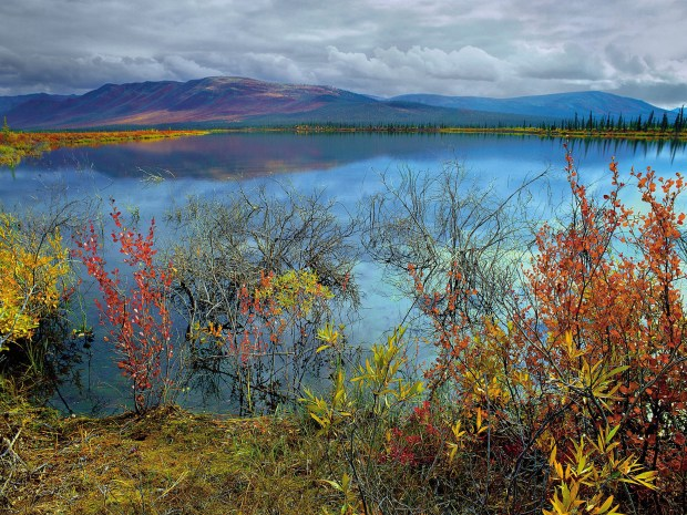 The Arctic National Wildlife Refuge in Alaska is in danger of being opened to oil and gas drilling.