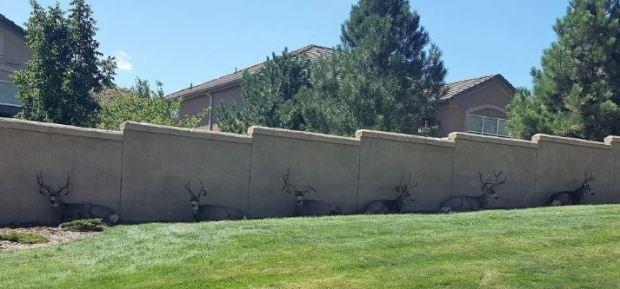 Colorado Springs' urban deer population is said to be dangerously high, and the City Council is considering options to reduce it.