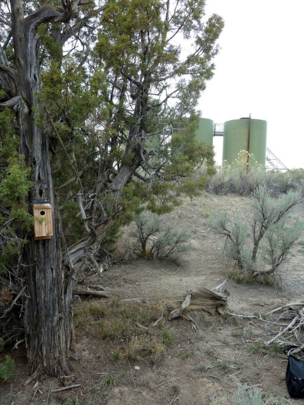 A nesting box near a natural gas facility. Researchers found that birds nesting near sources of persistent noise show signs of chronic stress.