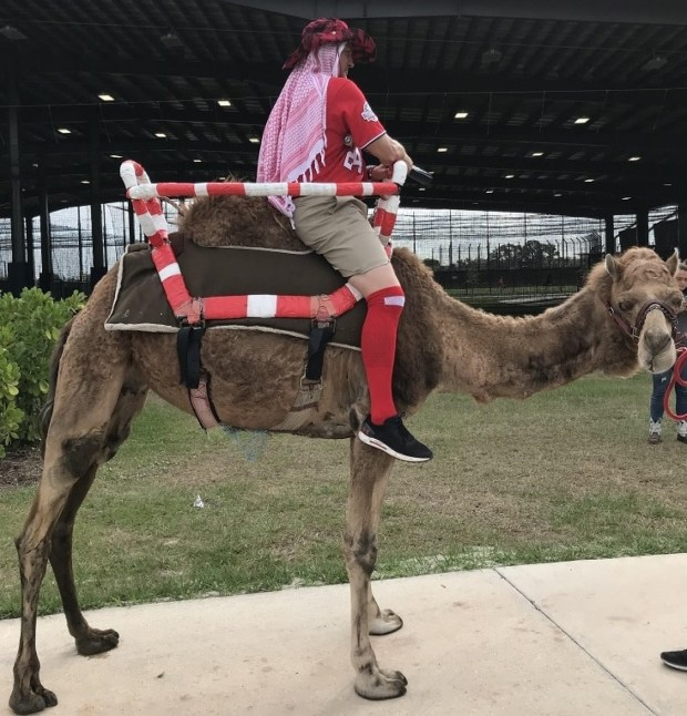 This is a camel. ...