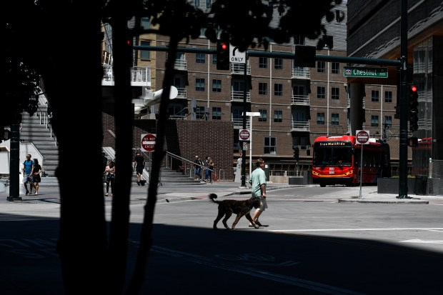 A man walks a dog on Chestnut Place downtown on May 17, 2018. An estimated 1,700 dogs will soon live in the Union Station and Riverfront Park areas, between Union Station and Commons Park. This has caused some problems, including dead plants and trees as dogs with nowhere else to go relieve themselves in the few green spaces that exist. The Central Platte Valley Metro District and the Riverfront Park Association are working on plans to protect trees, educate dog owners and create targeted dog-relief areas. (Photo by AAron Ontiveroz/The Denver Post)