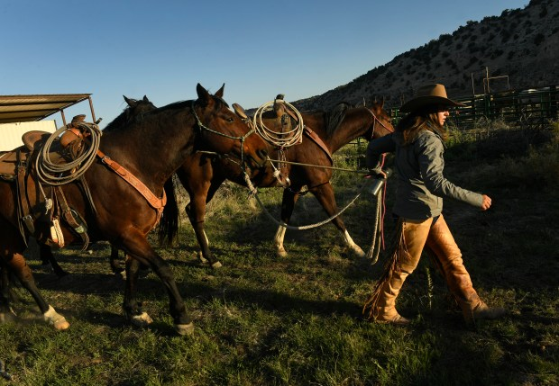 Cowgirl Lindsey Fitch gets her horses ...