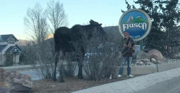 A man chased an angry moose onto a median in Frisco.