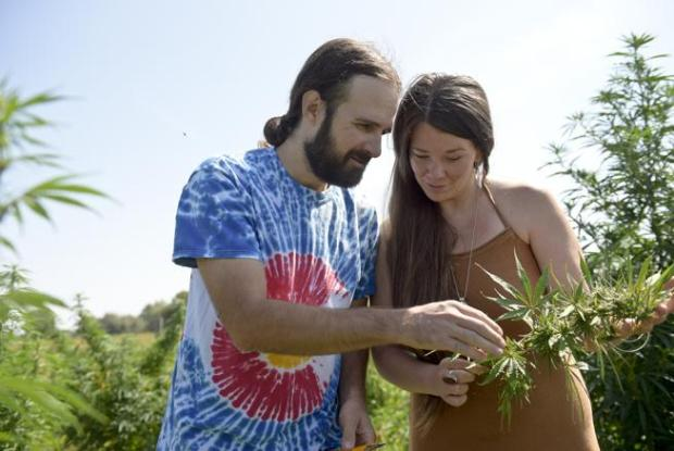 Ed and Jessica Bates look at a bud they harvested in their 5-acre hemp field in Boulder County on Aug. 28. They are opening a CBD specialty store where they will sell products made from hemp they grow. (Lewis Geyer / Staff Photographer)
