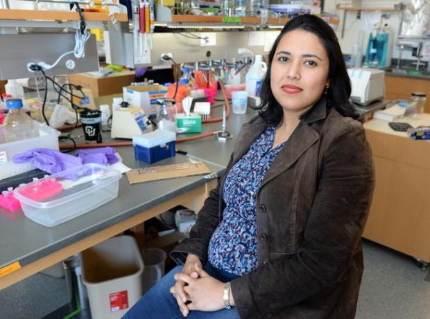 Anushree Chatterjee is the principal investigator in a genetic disruption strategy developed by University of Colorado Boulder researchers that effectively stymies the evolution of antibiotic-resistant bacteria such as E. coli, giving scientists a crucial leg up in the ongoing battle against deadly superbugs. (