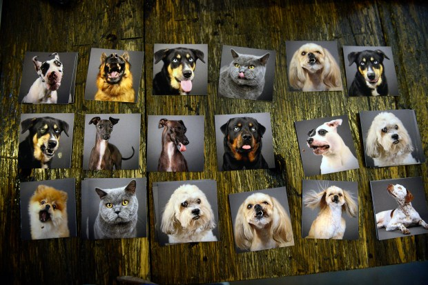 Photos of pet portraits are displayed on a table