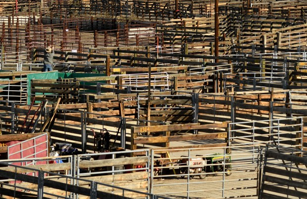"""National Western Stock Show celebrates """"Year of Yards"""" as ..."""
