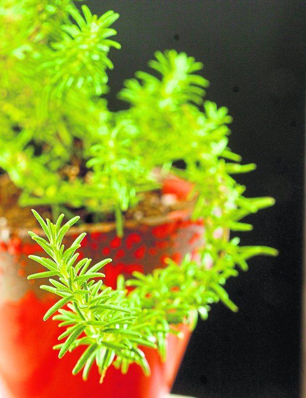 Tips on harvesting herbs for good food and your good health