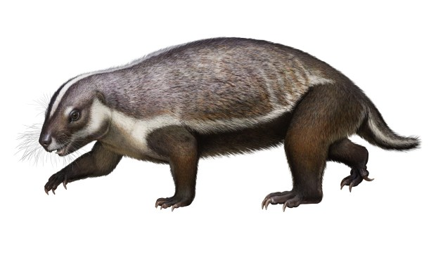 Denver scientist leads discovery of new, bizarre mammal species that walked with dinosaurs 66 million years ago