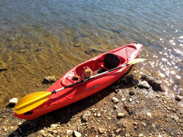 Maya the cat on the bank of a lake in a kayak.
