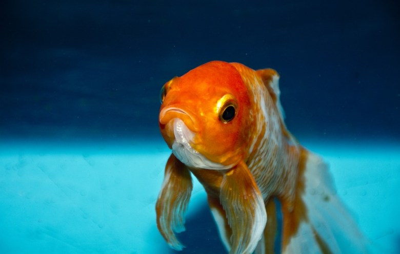 Even this goldfish thinks you should be reading these subreddits.