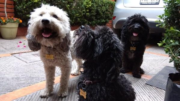 Perros en casa: el dilema de dejarlos solos.