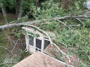 Tree-on-Roof
