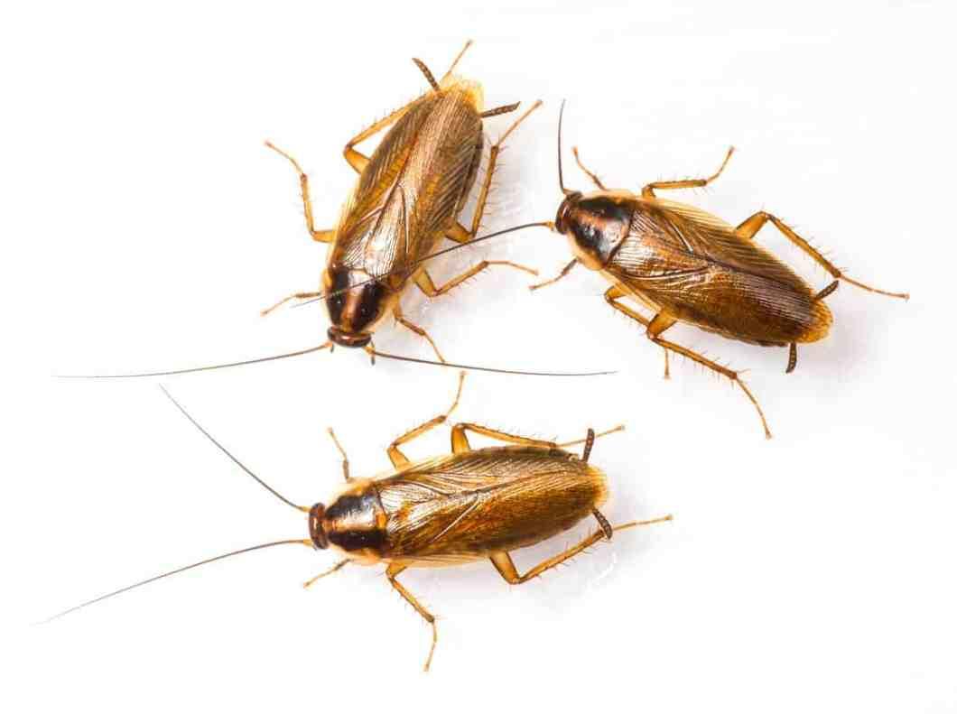 Baby Roaches In Kitchen Sink | Dandk Organizer