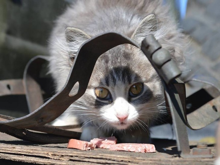 Cats in ATO: the best for 2016 - Photo 14