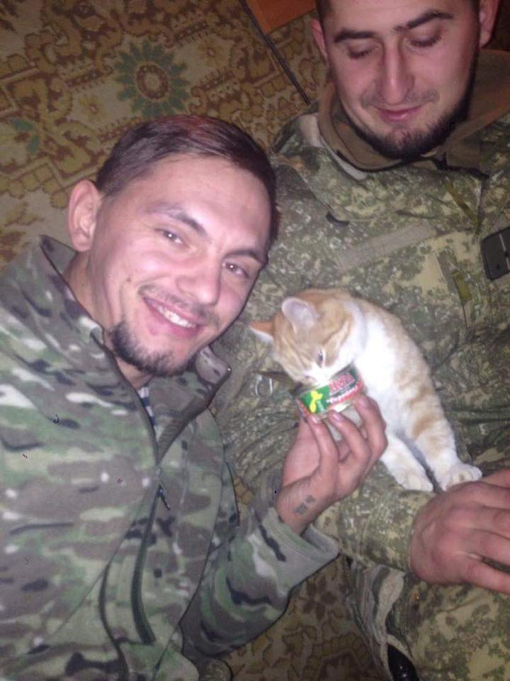 Cats in ATO: the best for 2016 - Photo 29