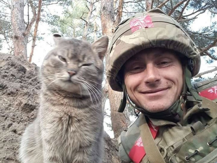 Cats in ATO: the best for 2016 - Photo 28