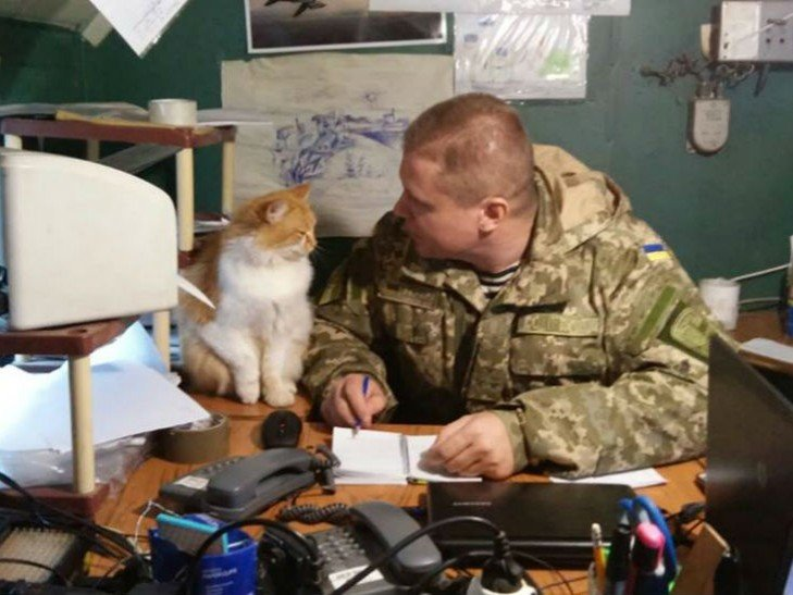 Cats in ATO: the best for 2016 - Photo 32