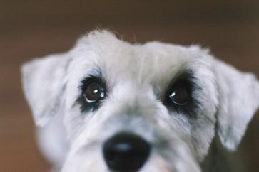 zooey-eyes