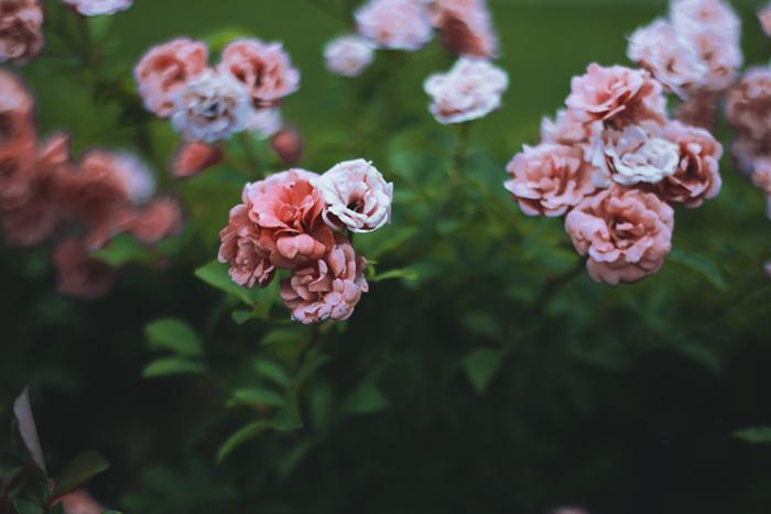 flores-ipiranga