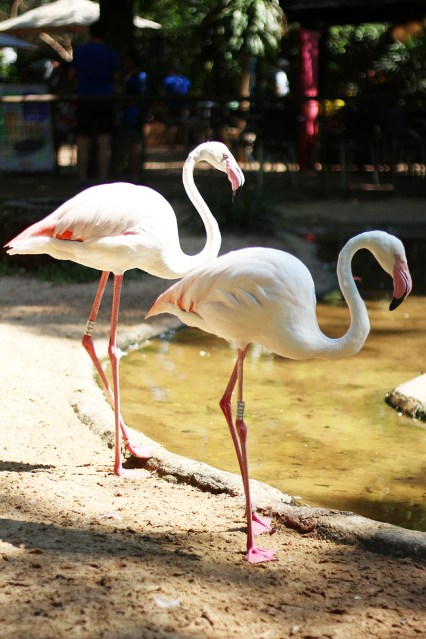 parque-das-aves-2