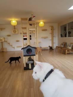 Foto: Cat Dog Cafe
