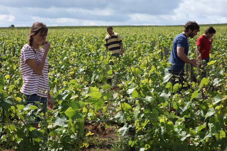 recensie Retour en Bourgogne