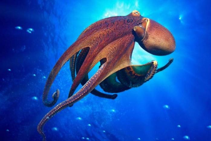 octopus-sharpest-animal-thieves