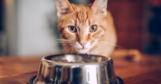 10-bad-foods-for-your-cat
