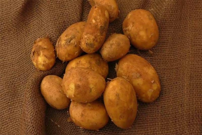 raw-potato