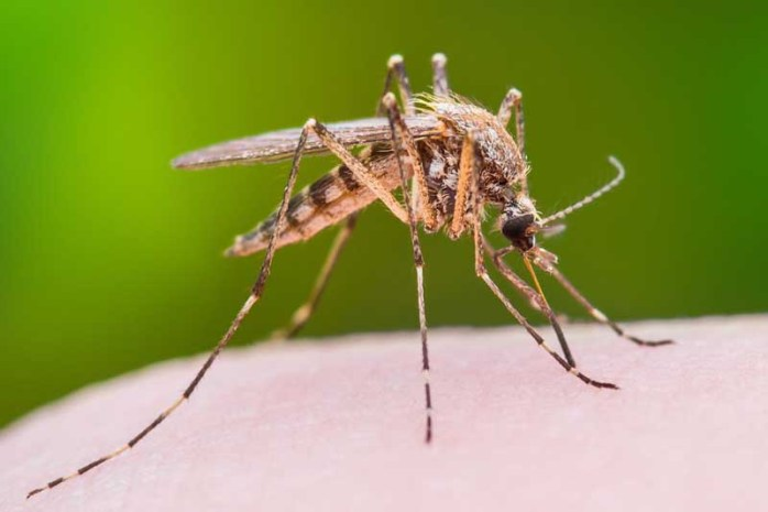 mosquitoes-can-be-dangerous-for-humans