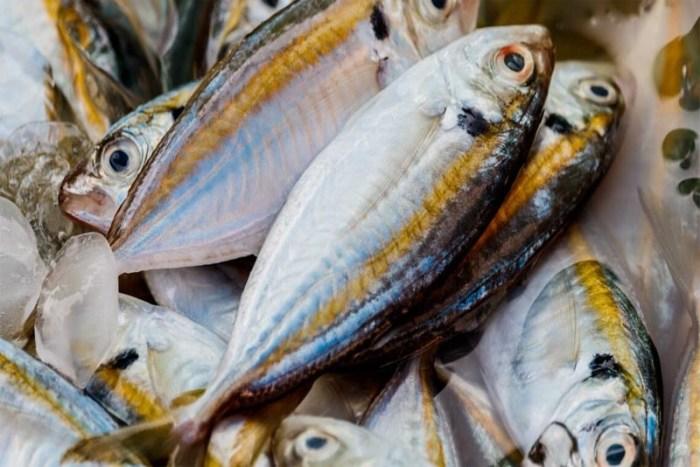 oily-fish-Immune-System